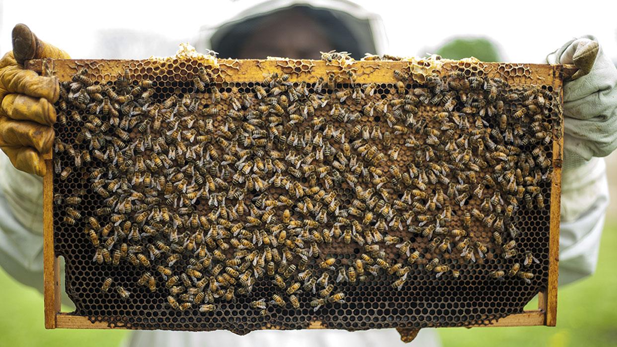 La miel también se cultiva