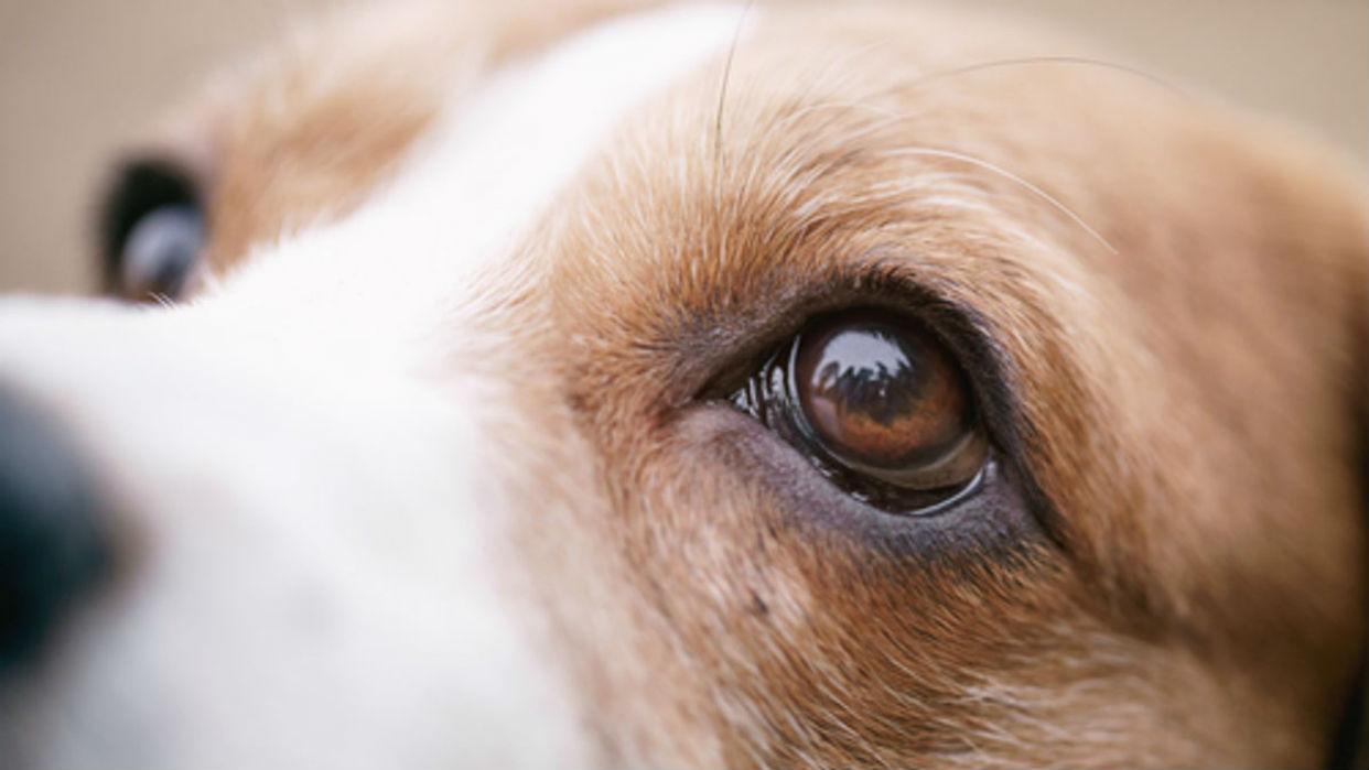 Si su mascota prefiere quedarse en un solo sitio es señal de alerta