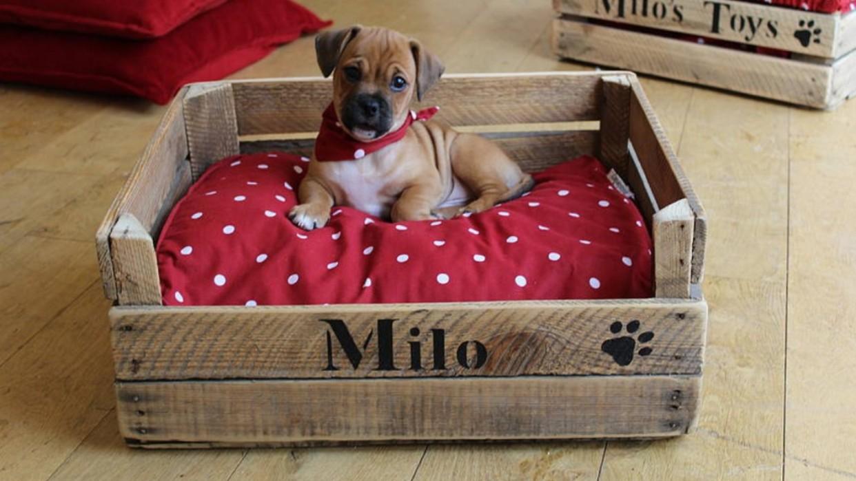 Nuestras mascotas merecen su propio espacio confortable