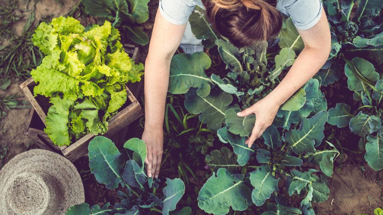 Gastronomía sostenible pensando en el futuro. Fotografía Alimente