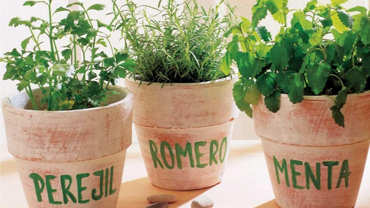 Hierbas aromáticas a nuestra disposición y cuidado / Floryfauna Monforte