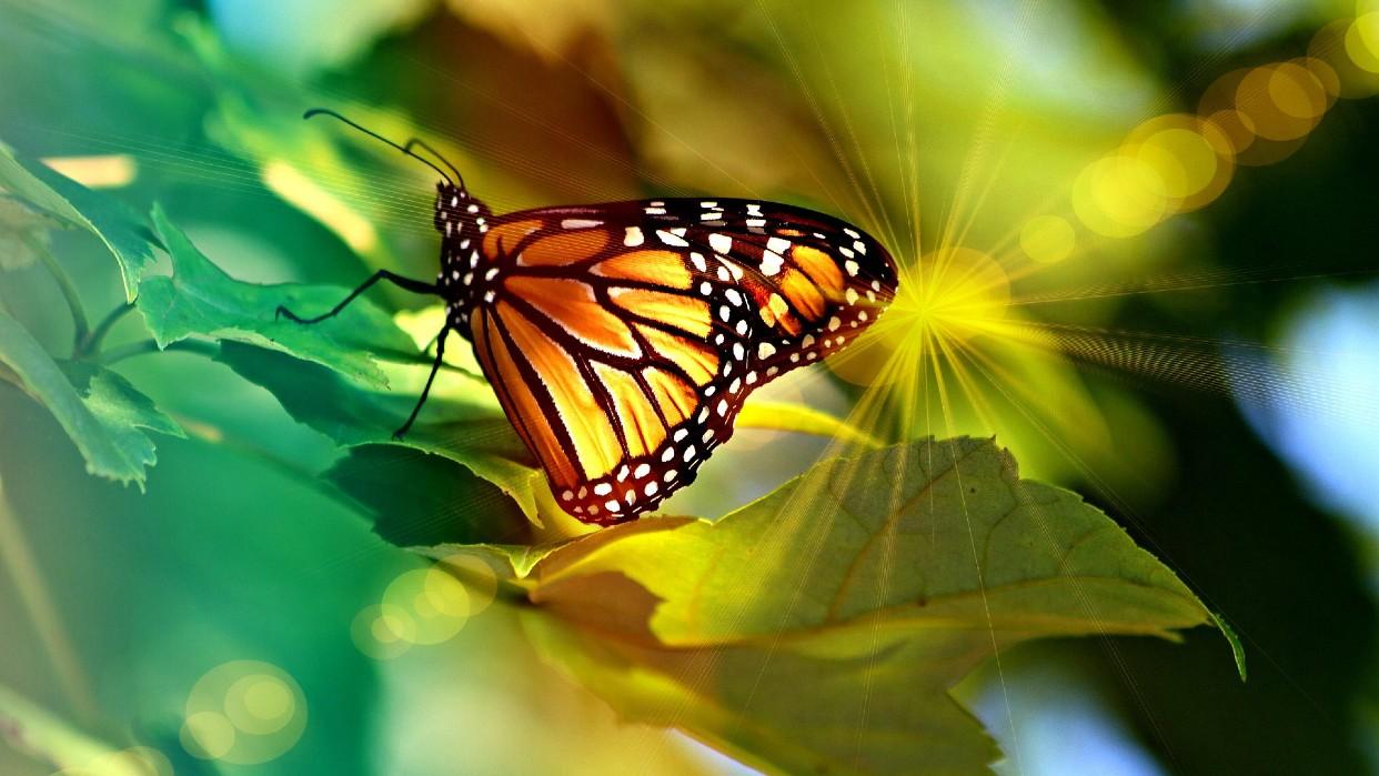 No debemos resistirnos a la transformación